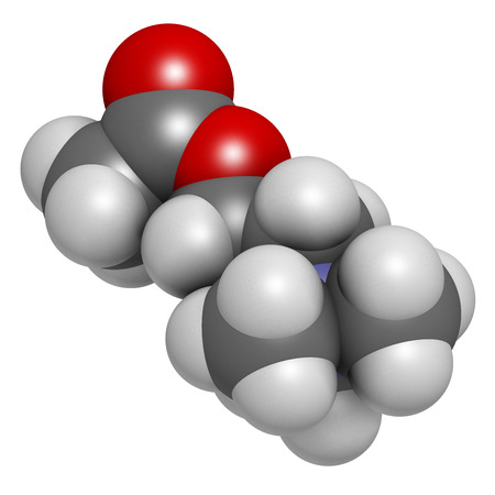 Acetylchloline (ACh) neurotransmitter molecule. Atoms are represented as spheres with conventional color coding: hydrogen (white), carbon (grey), oxygen (red), nitrogen (blue). photo