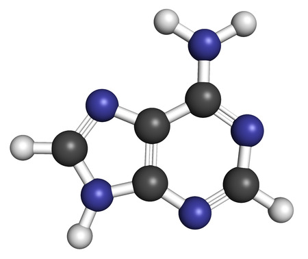 adenine: Adenine (A, Adenine) purine nucleobase molecule. Base present in DNA and RNA. Atoms are represented as spheres with conventional color coding: hydrogen (white), carbon (grey), nitrogen (blue). Stock Photo