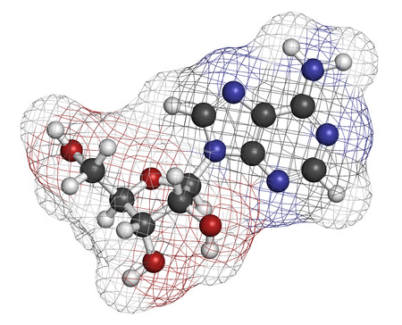 nucleoside: Adenosine (Ado) purine nucleoside molecule. Important component of ATP, ADP, cAMP and RNA. Also used as drug. Atoms are represented as spheres with conventional color coding: hydrogen (white), carbon (grey), oxygen (red), nitrogen (blue). Stock Photo