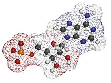 Adenosine monophosphate (AMP, adenylic acid) molecule. Nucleotide monomer of RNA. Composed of phosphate, ribose and adenine moieties. Atoms are represented as spheres with conventional color coding: hydrogen (white), carbon (grey), oxygen (red), nitrogen  photo