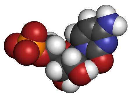 phosphate: Cytidine monophosphate (CMP, cytidylate) RNA building block molecule. Atoms are represented as spheres with conventional color coding: hydrogen (white), carbon (grey), nitrogen (blue), oxygen (red), phosphate (orange). Stock Photo