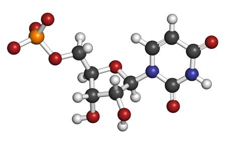 uracil: Uridine monophosphate (UMP, uridylic acid) nucleotide molecule. Building block of RNA. Atoms are represented as spheres with conventional color coding: hydrogen (white), carbon (grey), oxygen (red), nitrogen (blue), phosphorus (orange). Stock Photo