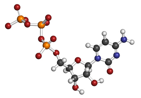 nucleotide: Cytidine triphosphate (CTP) RNA building block molecule. Also functions as cofactor to some enzymes. Atoms are represented as spheres with conventional color coding: hydrogen (white), carbon (grey), nitrogen (blue), oxygen (red), phosphate (orange).