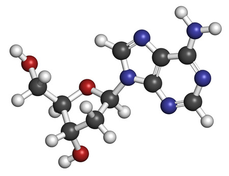 nucleoside: Deoxyadenosine (dA) nucleoside molecule. DNA building block. Atoms are represented as spheres with conventional color coding: hydrogen (white), carbon (grey), nitrogen (blue), oxygen (red).
