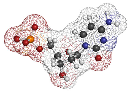 triphosphate: Deoxycytidine monophosphate (dCMP) nucleotide molecule. DNA building block. Atoms are represented as spheres with conventional color coding: hydrogen (white), carbon (grey), nitrogen (blue), oxygen (red), phosphorus (orange).