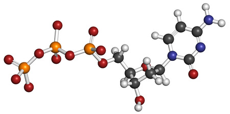 nucleotide: Deoxycytidine triphosphate (dCTP) nucleotide molecule. DNA building block. Atoms are represented as spheres with conventional color coding: hydrogen (white), carbon (grey), nitrogen (blue), oxygen (red), phosphorus (orange).