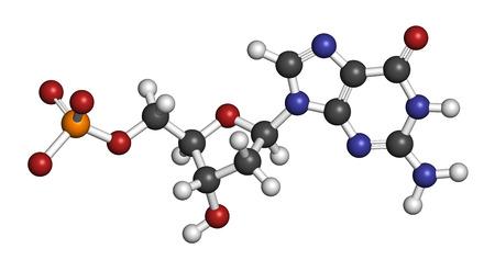 nucleoside: Deoxyguanosine monophosphate (dGMP) nucleotide molecule. DNA building block.