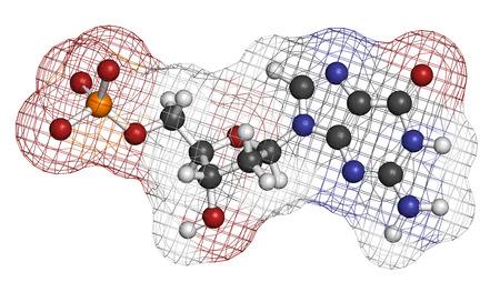 triphosphate: Deoxyguanosine monophosphate (dGMP) nucleotide molecule. DNA building block.