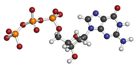 triphosphate: Deoxyguanosine triphosphate (dGTP) nucleotide molecule. DNA building block. Atoms are represented as spheres with conventional color coding: hydrogen (white), carbon (grey), nitrogen (blue), oxygen (red), phosphorus (orange).