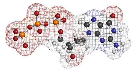 nucleotide: Deoxyguanosine triphosphate (dGTP) nucleotide molecule. DNA building block. Atoms are represented as spheres with conventional color coding: hydrogen (white), carbon (grey), nitrogen (blue), oxygen (red), phosphorus (orange).