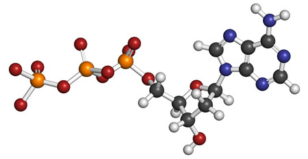 nucleotide: Deoxyadenosine triphosphate (dATP) nucleotide molecule. DNA building block. Atoms are represented as spheres with conventional color coding: hydrogen (white), carbon (grey), nitrogen (blue), oxygen (red), phosphorus (orange). Stock Photo