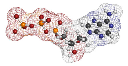 deoxyribonucleic: Deoxyadenosine triphosphate (dATP) nucleotide molecule. DNA building block. Atoms are represented as spheres with conventional color coding: hydrogen (white), carbon (grey), nitrogen (blue), oxygen (red), phosphorus (orange). Stock Photo