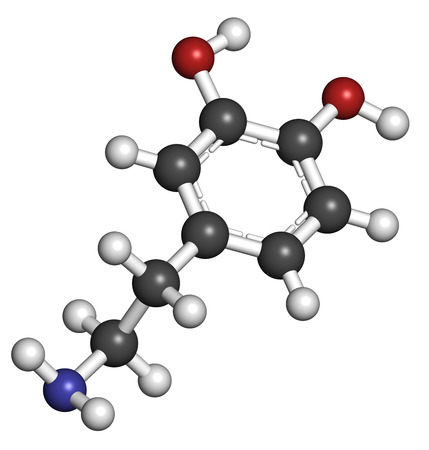 neurotransmitter: Dopamine neurotransmitter molecule. Catecholamine class compound that also acts as hormone. Atoms are represented as spheres with conventional color coding: hydrogen (white), carbon (grey), oxygen (red), nitrogen (blue).