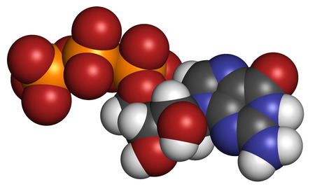 triphosphate: Guanosine triphosphate (GTP) RNA building block molecule. Also used as energy transport molecule and in signal transduction. Atoms are represented as spheres with conventional color coding: hydrogen (white), carbon (grey), nitrogen (blue), oxygen (red), p