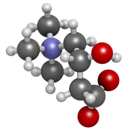 ammonium: Carnitine molecule, chemical structure. Often found in nutritional supplements. Natural food sources include red meat and dairy products. Atoms are represented as spheres with conventional color coding: hydrogen (white), carbon (grey), nitrogen (blue), ox Stock Photo