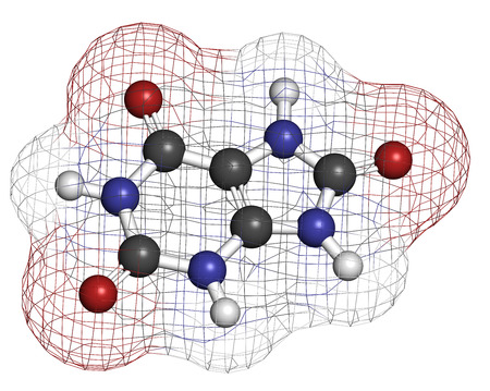 purine: Uric acid molecule. High blood levels lead to gout disease. Atoms are represented as spheres with conventional color coding: hydrogen (white), carbon (grey), oxygen (red), nitrogen (blue).