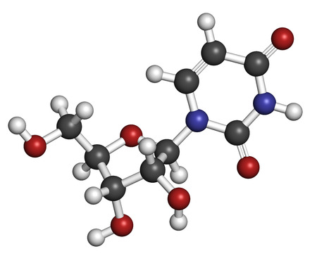 nucleoside: Uridine nucleoside molecule. Building block of RNA. Atoms are represented as spheres with conventional color coding: hydrogen (white), carbon (grey), oxygen (red), nitrogen (blue).
