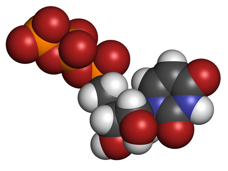 nucleoside: Uridine triphosphate (UTP) nucleotide molecule. Building block of RNA. Atoms are represented as spheres with conventional color coding: hydrogen (white), carbon (grey), oxygen (red), nitrogen (blue), phosphorus (orange).