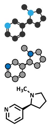 中毒性の: ニコチン タバコの覚醒剤の分子。習慣性の主成分でタバコの煙。原子は従来の色コーディングの球として表される: 水素 (白)、カーボン (灰色)、窒素 (青)。
