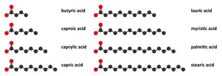 Saturated fatty acids: butyric, caproic, caprylic, capric, lauric, myristic, palmitic and stearic acid. Stylized 2D renderings.