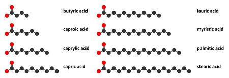 grasas saturadas: Los ácidos grasos saturados: butírico, caproico, caprílico, cáprico, láurico, mirístico, palmítico y ácido esteárico. Renderizados en 2D estilizados.