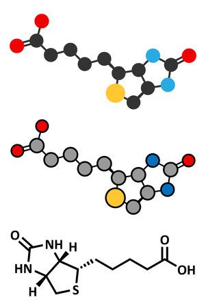 supplementation: Vitamin B7 (biotin) molecule. Stylized 2D rendering and conventional skeletal formula.