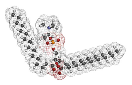 constituent: Pulmonary surfactant molecule. Chemical structure of dipalmitoylphosphatidylcholine (DPPC) the major constituent of lung surfactant. Atoms are represented as spheres with conventional color coding: hydrogen (white), carbon (grey), oxygen (red), nitrogen (