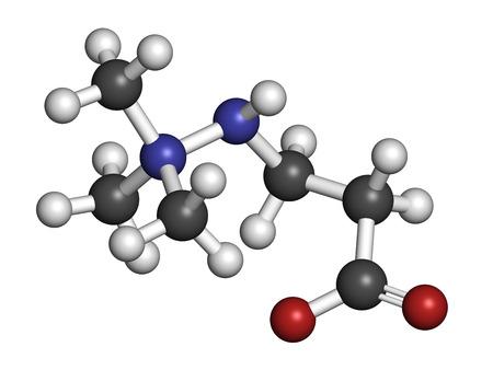 angina: Meldonium mol�cula de f�rmaco anti-isqu�mico. Se utiliza en el tratamiento de la angina de pecho y el infarto de miocardio. Los �tomos se representan como esferas con codificaci�n de colores convencionales: hidr�geno (blanco), carb�n (gris), ox�geno (rojo), nitr�geno (azul). Foto de archivo