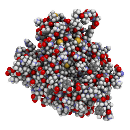 programmed: Caspase 3 apoptosis protein. Enzyme that plays important role in programmed cell death. Atoms shown as color-coded spheres.