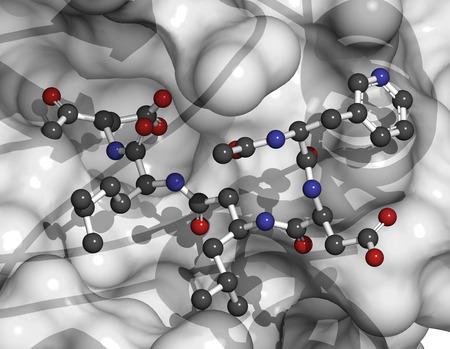 protease: La caspasa 3 prote�na de apoptosis. Enzima que juega un papel importante en la muerte celular programada. �tomos del ligando que se muestran como esferas con c�digos de colores, prote�nas que se muestran como dibujos animados + superficie semitransparente (primer plano).