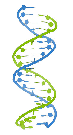 nucleotide: DNA molecular structure. Main carrier of genetic information in all organisms. The DNA shown here is part of a human gene and is shown as a linear double helix. Bluegreen cartoon model. Stock Photo