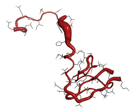 anticoagulant: Hirudin protein molecule. Anticoagulant protein from leeches that prevents blood clotting by inhibiting thrombin. Topically used in treatment of hematoma. Putty backbone + line model.