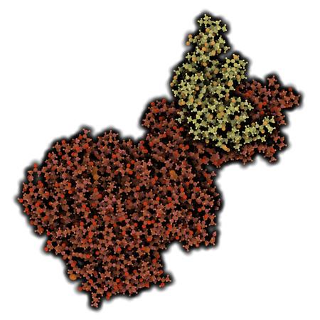 triglycerides: Lipasa pancre�tica (HPL) de la enzima humana, en complejo con colipasa. Realiza primeros pasos en la digesti�n de los triglic�ridos (grasa, aceite) en el duodeno. Los �tomos que se muestran como esferas con c�digos de colores. La lipasa sombra roja, colipasa sombra amarilla.