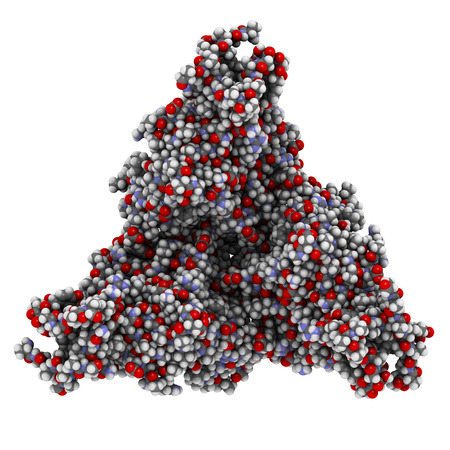 glycoprotein: Ebola virus glycoprotein (GP), molecular structure. Occurs as spikes on ebola virus surface; target for vaccine development. Atoms shown as color-coded spheres.