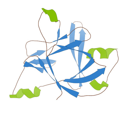 receptor: Anakinra rheumatoid arthritis drug, molecular structure. Recombinant form of human interleukin-1 (IL-1) receptor antagonist protein. Cartoon model, secondary structure coloring: alpha-helices green, beta sheets blue.