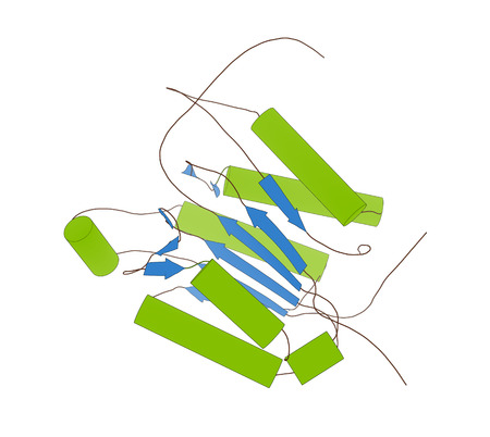 enzyme: Caspase 3 apoptosis protein. Enzyme that plays important role in programmed cell death. Cartoon model, secondary structure coloring: alpha-helices green, beta sheets blue.