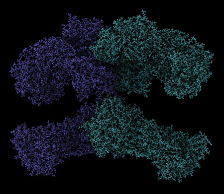 fas: Fatty acid synthase (FAS) enzyme. Responsible for the synthesis of fatty acids. Atoms shown as spheres; chains colored differently. Stock Photo