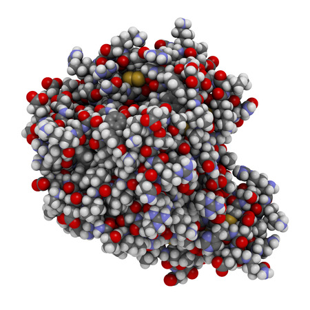anticoagulant: Factor de coagulaci�n sangu�nea Xa. Reproduce papel en la coagulaci�n de la sangre y la trombosis. Los �tomos que se muestran como esferas con c�digos de colores. Foto de archivo