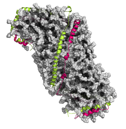 lipoprotein: High density lipoprotein (HDL). Carrier of good cholesterol in the blood. Particle composed of Apoliprotein AI wrapped around lipid core. Lipid core: surface model. Protein: cartoon model.