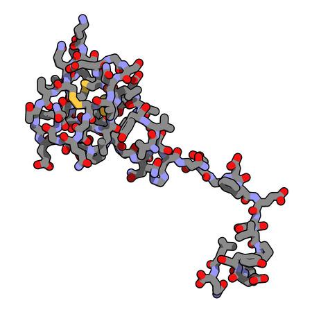 anticoagulant: La hirudina mol�cula de prote�na. Prote�na anticoagulante de sanguijuelas que previene la coagulaci�n de la sangre mediante la inhibici�n de la trombina. Utiliza por v�a t�pica en el tratamiento de hematoma. Los �tomos y enlaces mostrados como tubos con c�digos de colores. Foto de archivo