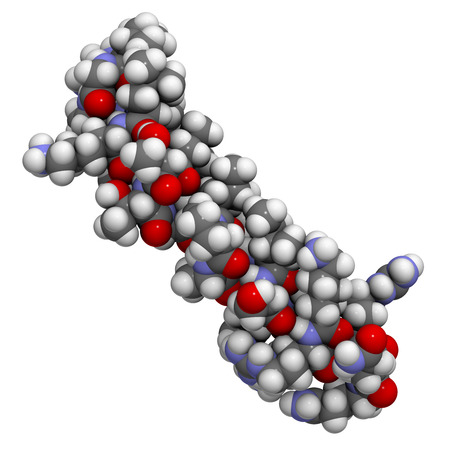 polypeptide: Melittin peptide toxin. Major component of apitoxin (honey been venom). Atoms shown as color-coded spheres.