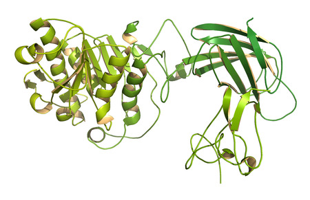 pancreatic: Human pancreatic lipase (HPL) enzyme, in complex with colipase. Performs first steps in the digestion of triglycerides (fat, oil) in the duodenum. Cartoon model, N-to-C color gradient. Stock Photo