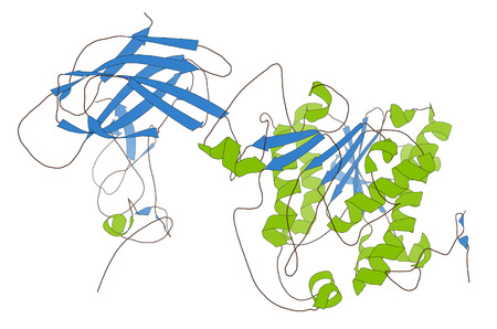 pancreatic: Human pancreatic lipase (HPL) enzyme, in complex with colipase. Performs first steps in the digestion of triglycerides (fat, oil) in the duodenum.  Cartoon model, secondary structure coloring: alpha-helices green, beta sheets blue.