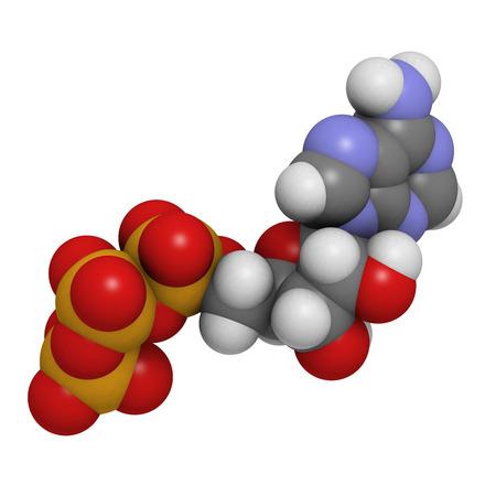 Adenosintriphosphat (ATP) Energie Transportmolekül, chemische Struktur. ATP ist der Hauptenergietransportmolekül in den meisten Organismen. Wasserstoff (weiß), Kohlenstoff (grau), Sauerstoff (rot), nitrog: Atome sind als Kugeln mit konventionellen Farbcodierung dargestellt Standard-Bild - 36966274