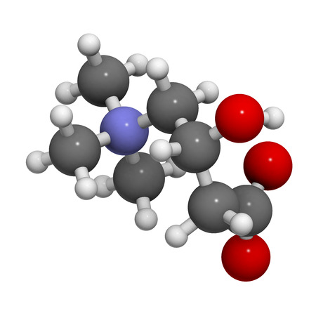 food supplement: Carnitine food supplement molecule, chemical structure. Atoms are represented as spheres with conventional color coding: hydrogen (white), carbon (grey), oxygen (red), nitrogen (blue).