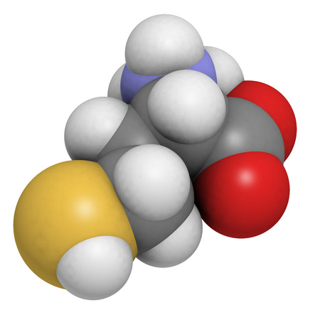 Homocysteine (Hcy) amino acid, molecular model. Elevated blood homocysteine levels are associated with cardiovascular disease. Atoms are represented as spheres with conventional color coding: hydrogen (white), carbon (grey), oxygen (red), nitrogen (blue), photo
