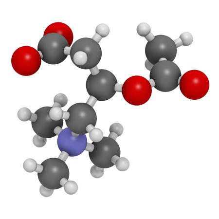 HIDROGENO: Acetilcarnitina (ALCAR) molécula suplemento nutricional. Los átomos se representan como esferas con codificación de colores convencionales: hidrógeno (blanco), carbón (gris), oxígeno (rojo), nitrógeno (azul). Foto de archivo