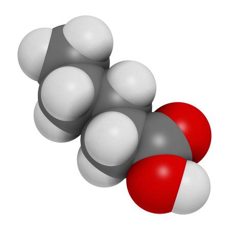 valerian plant: Valeric acid molecule. Smelly molecule, present in the plant valerian (Valeriana officinalis). Stock Photo