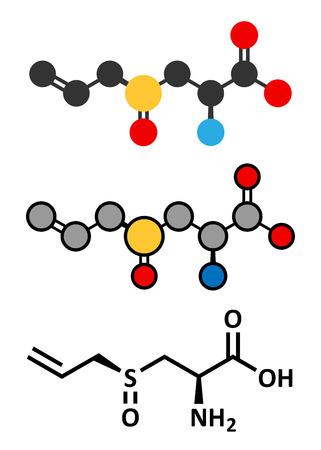 Alliin garlic molecule. Stylized 2D renderings and conventional skeletal formula.