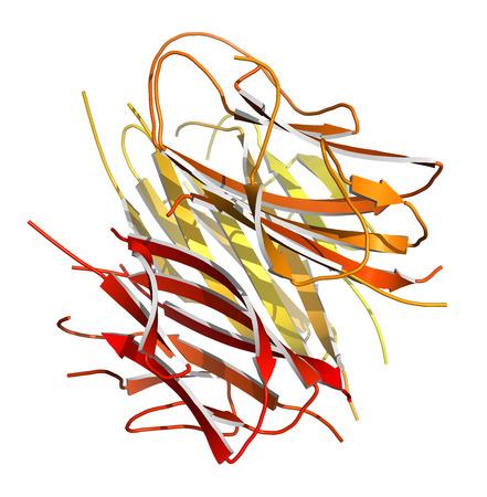 complemento: Hormona de prote�na adiponectina. Reproduce papel en la regulaci�n del metabolismo. Modelo de la historieta. Colorear-N-C degradado.